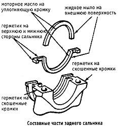 составные части заднего сальника
